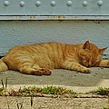 Ocracoke Cat 8/04 by Mark Lemmon