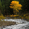October Beauty Along Grimes Creek by Ed  Riche