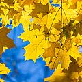 October Blues 8 - Square by Alexander Senin