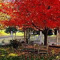 October Colors by Nancy Wagener