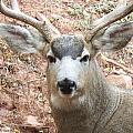 October Deer by Lanita Williams