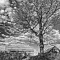 October Evening Monochrome by Steve Harrington