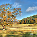 October Gold by David Birchall