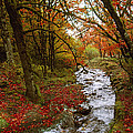 October In Oregon by Shelly Wilkerson