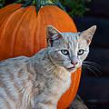 October Kitten #3 by Nikolyn McDonald