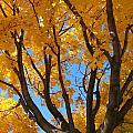 October Sky 1 by Susan Radke