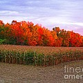 October Sunset On The Autumn Woods by J McCombie