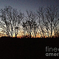 October Sunset Trees Silhouettes by Conni Schaftenaar
