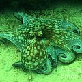Octopus In The Sand by Adam Jewell