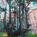 Octopus Tree  by James Barnes