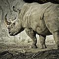 Odd-toed Rhino by LeeAnn McLaneGoetz McLaneGoetzStudioLLCcom