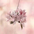 Ode To Spring by Kim Hojnacki