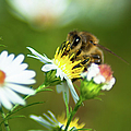 Of Bee And Flower by Optical Playground By MP Ray
