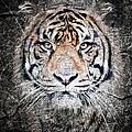 Of Tigers And Stone by Athena Mckinzie