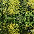 Ogle Lake Reflections 2 by Mary Carol Story