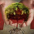 Oh Canada  by Terry Fleckney