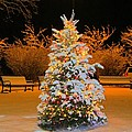 Oh Christmas Tree by Elizabeth Dow