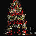 Oh Christmas Tree Oh Christmas Tree by Living Color Photography Lorraine Lynch