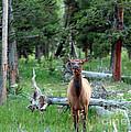 Oh Dear I See A Deer by Ausra Huntington nee Paulauskaite