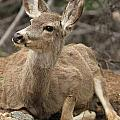 Oh Deer by Adam Jewell