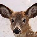 Oh Deer by Anita Freeman