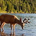 Oh Deer Is That Me by Bruce Gourley