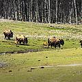 Oh Give Me A Home Where The Buffalo Roam by LeeAnn McLaneGoetz McLaneGoetzStudioLLCcom
