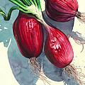 Oh I Like Onions by Lynda Hoffman-Snodgrass