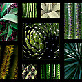Oh My Cacti by Marlene Burns