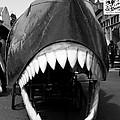 Oh The Shark Bites by Lorraine Devon Wilke