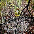 Oh What A Web We Weave by Christian Mattison
