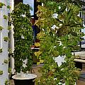 O'hare Airport Hydroponic Garden by Diane Lent
