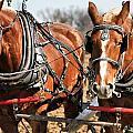 Ohio Draft Horses by Dan Sproul