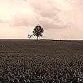 Ohio Fields  by Heather Bice
