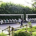 Oil Painting - Stationary Battery Powered Tourist Transport Vehicle Inside The Jurong Bird Park by Ashish Agarwal