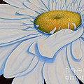 Oil Painting - Daisy by Roena King