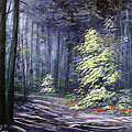 Oil Painting - Forest Light by Roena King