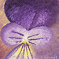 Oil Painting Of Pansy - Viola Tricolor by Kerstin Ivarsson