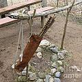 Ojibwe Arrows by Terry Hunt