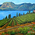 Okanagan Vineyard by Alicia Fowler