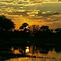Okavango Sunset by Amanda Stadther