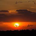 Okeechobee Sunset by Mark Little