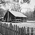 Okefenokee Home by Southern Photo