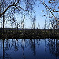 Okefenokee Reflection by Evelyn Hill