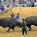 Okinawan Culture Bull Versus Bull Okinawan Bullfighting by Jeff at JSJ Photography