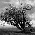 Oklahoma Cellar by Dewayne Eakins