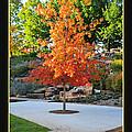 Oklahoma Fall by Randi Grace Nilsberg