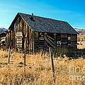 Old And Forgotten by Robert Bales