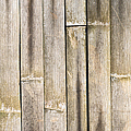 Old Bamboo Fence by Alexander Senin