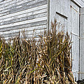 Old Barn And Cornstalks by Photographic Arts And Design Studio